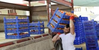 Domates Fiyatları Çiftçiyi Sevindirdi