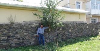 Duvardan Ağaç Çıktı