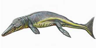165 Milyon Yıllık Dev Fosil