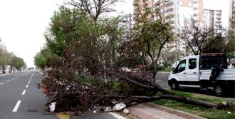 Şiddetli Lodos Ağaç Söktü