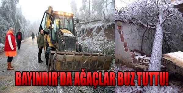 Ormanda Karakış Tahribatı