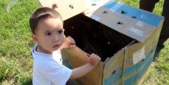 Yavru Karacalar Koruma Altına Alındı