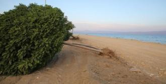 Erciş'te 5 Dakika Süren Fırtına, Ağaçları Devirdi