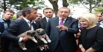 Erdoğan: Bir Pop Star Çıkardılar, İyi Saz Çalıyormuş