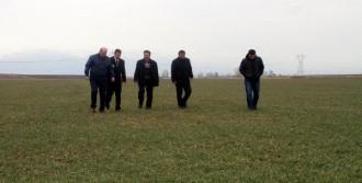 Dayanıklı Rus Buğdayı Deneniyor