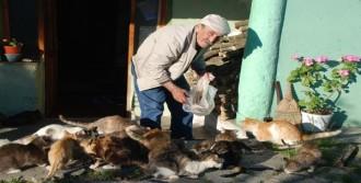Evinin Bahçesinde 17 Kedi Besliyor
