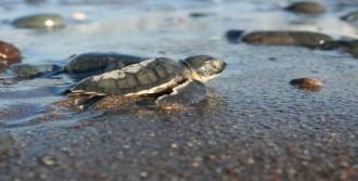 Turna Ve Deniz Kaplumbağası