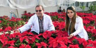 Yetiştirilen Çiçekler Satışa Sunuldu