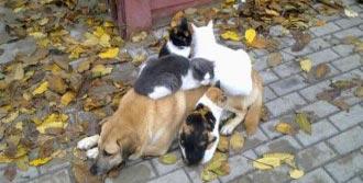 Bu Sevimli Hayvanların Dostluğu Şaşırtıyor