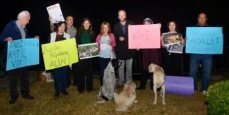 Falezlerde Kedi Katliamı Protestosu