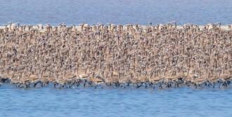 Flamingo Adasında 7 Bin Yavru