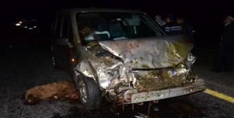 Kazada 80 Koyun Telef Oldu, Sürücü Kaçtı