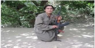 PKK'lı Teröristin Adını Parka Verdi