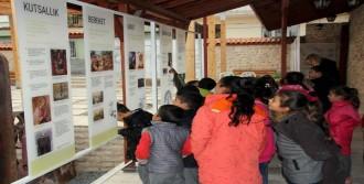Hatay'a Zeytin Müzesi