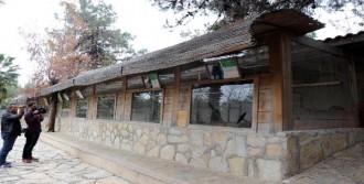 Hırsızlar, Hayvanat Bahçesinden Papağan Çaldı