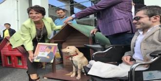 'Sokak Hayvanları İçin Kulübe'