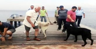 İki Köpeğin İbretlik Dostluğu
