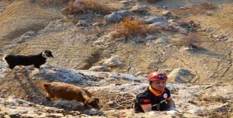 İnatçı Keçileri Afad Kurtardı
