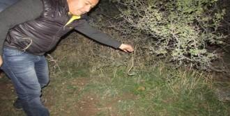 Bulduğu Yavru Yılanı Doğaya Bıraktı