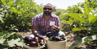 İzinsiz Aldığı Patlıcanlar İçin Para Bırakıp Notla Helallik İstedi