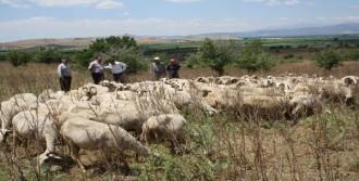 İzmir'de Mera Alanları Kiraya Çıkarıldı