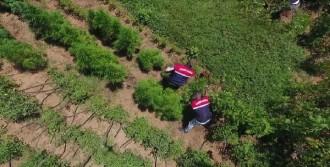 Jandarmadan Drone ile Uyuşturucu Avı