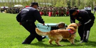 Jandarmanın Yetenekli Köpekleri