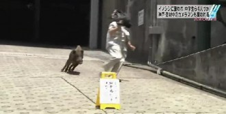 Japonya'da Domuz Dehşeti