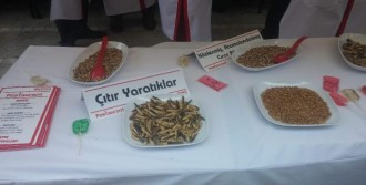 Kadıköy'de Böcek İkramı Görenleri Şaşırttı