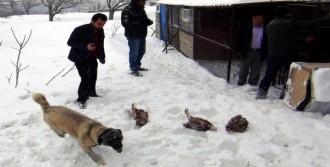 Kahramanmaraş'ta Kar Tavukları Telef Etti