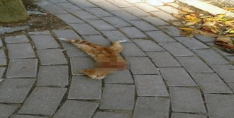 Kafası Kesilmiş Kedi Bulundu