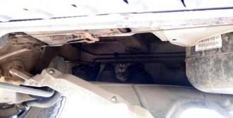 Kamyonette Mahsur Kalan Kedi Kurtarıldı