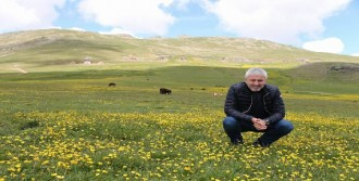 Karadeniz Yaylaları 'Yeşil Yol'la Bağlanıyor