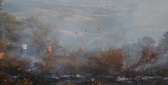 Karamürsel'de 5 Hektar Ormanlık Alan Yandı