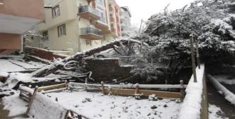 Kartal'da Ağaç Devrildi