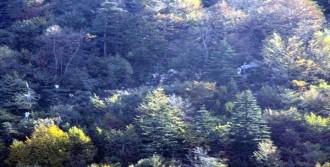 Kartepe'de Düşen Helikopterin Enkazı Kaldırılıyor