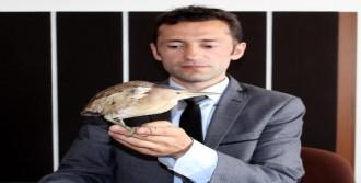 Hint Gölet Balıkçıl Kuşu Bulundu