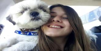Kayıp Köpeğini Billboard İlanıyla Arıyor