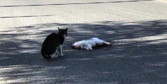 Kedinin Başından Ayrılmadı