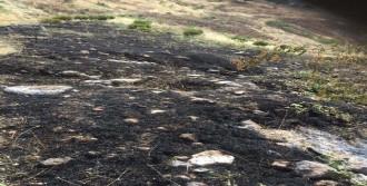 Ağaçlandırılan Alan Yine Yakıldı