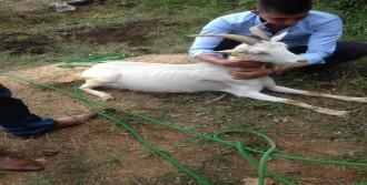 Kuyuya Düşen Keçiyi İtfaiye Kurtardı