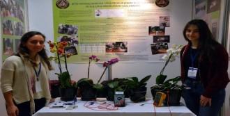 Bitki Yapraklarından Enerji Elde Ettiler