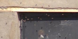 Arılara Basınçlı Su İle Müdahale