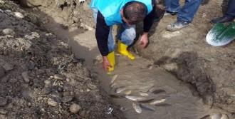 Mahsur Kalan Binlerce Balık Kurtarıldı