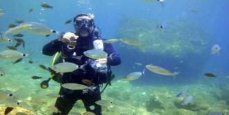 Marmaris'te Dalış Turizmi Çağrısı