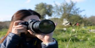Mersin'in Kelebekleri Kayıt Altına Alınıyor