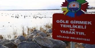 Mogan Gölü'nde Aç Kalan Kuşlara Yem Atıldı