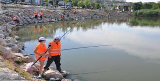 Mogan Ve Eymir Gölü'nde Balık Katliamı