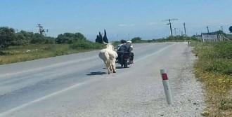 Ata Karayolunda Motosikletli Eziyet
