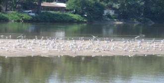 Nehirde Debi Düştü Adacıklar Oluştu